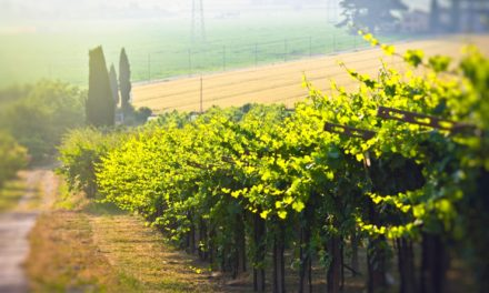 7 Best Wine Destinations Around The World To Explore