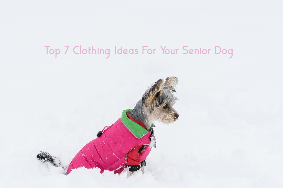 Top 7 Clothing Ideas For Your Senior Dog