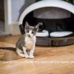 5 AUTOMATIC CAT FEEDERS YOU NEED WHEN TRAVELING