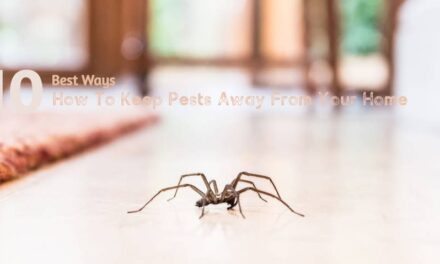 How To Keep Pests Away From Your Home.