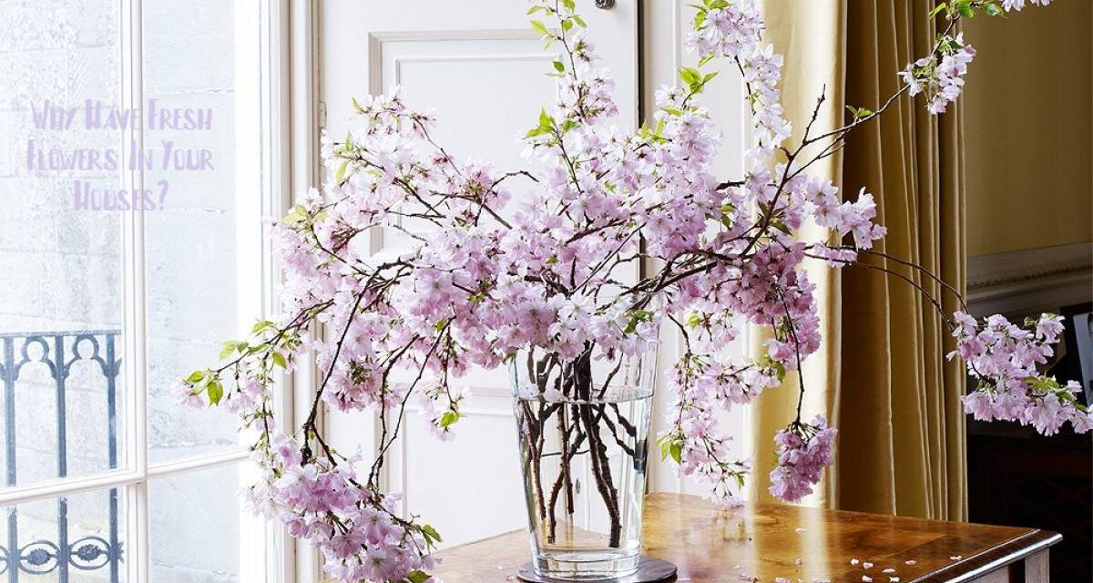 Why Have Fresh Flowers In Your Houses?