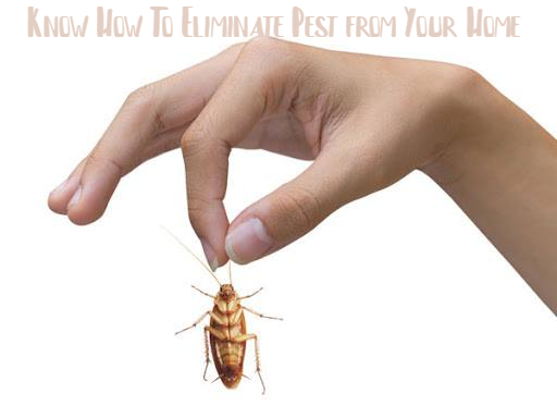 Know How To Eliminate Pest from Your Home | Pest Control