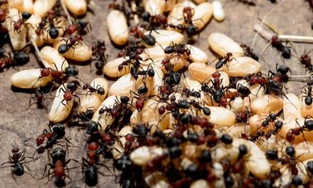 Ants And It's Get Rid Methods